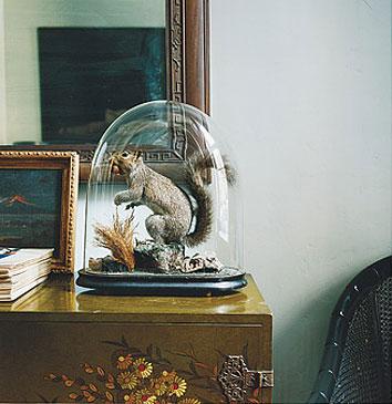 dead-animals-under-glass-domino