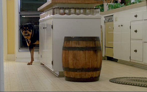 Ferris Bueller's 1980s kitchen-dog