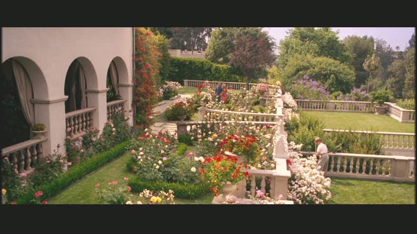 violas-garden