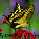 metamorphosis monday-bnotp