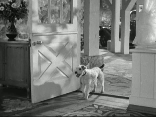 front door dog