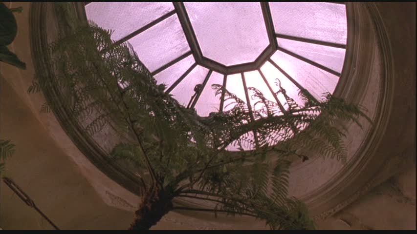 greenhouse skylight in Green Card apartment