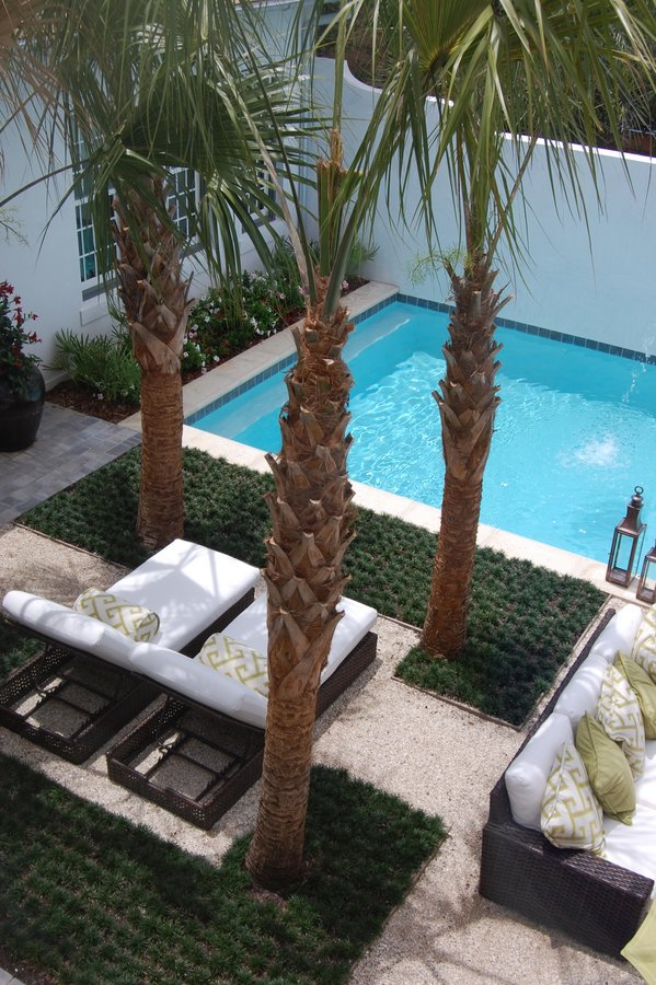 looking down on the palm trees and pool from second story of house