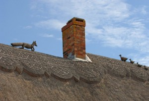Old Foxy chasing ducks on thatched roof-Old Fox Cottage