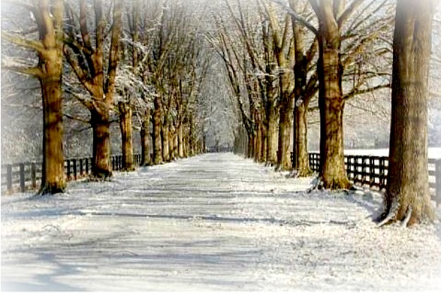 tree lined lane with snow