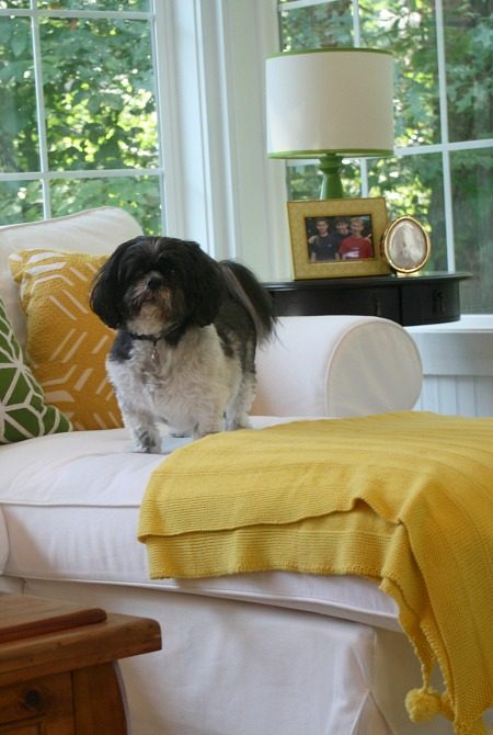 Maizie on the sunroom sofa