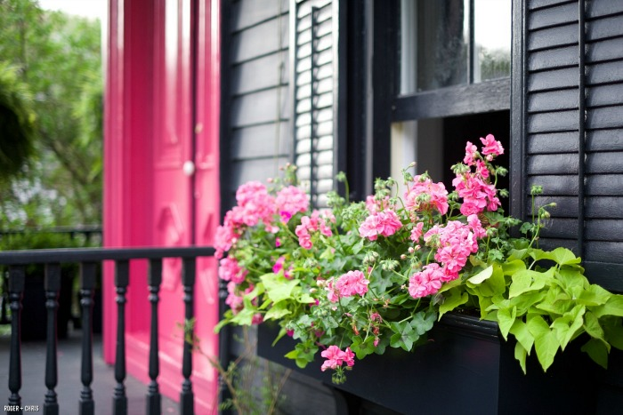 Pink door and pink flowers in windowbox