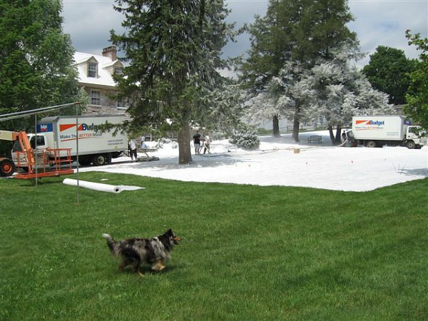 "creating fake winter on the set of ""Marley and Me"" movie"