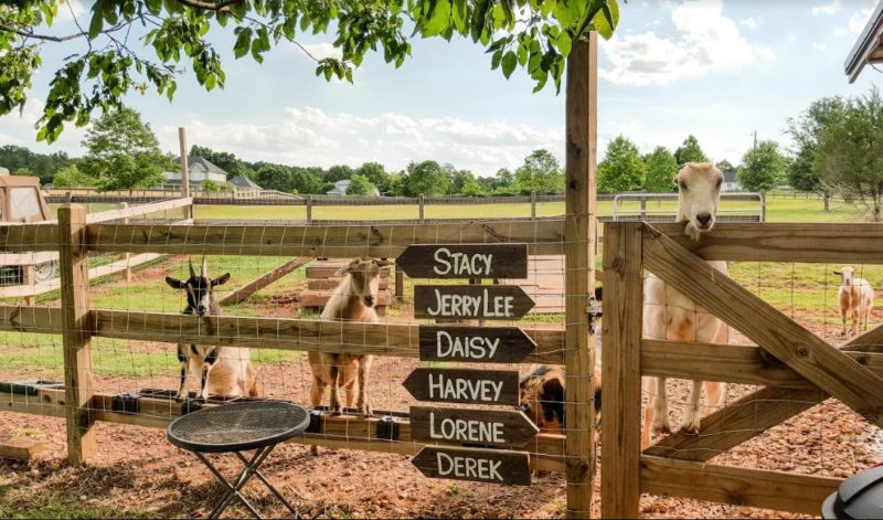 Signs with names of the farm animals on them