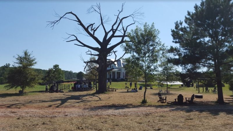 The tree they created for the Miracles from Heaven movie
